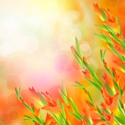 beautiful_flowers__by_gurbetruzgari-d5uxpkb.jpg